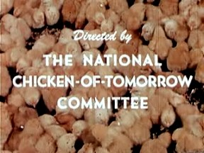 directed by the national chicken-of-tomorrow-committee